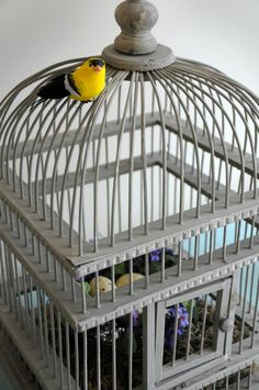 Create a #gray and #yellow baby shower theme with birds and cages.  #birdcage #babyshower