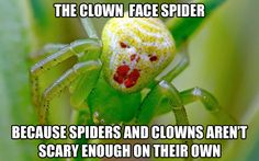 Spider + clown = nightmares   I found this way to funny and had to save it!