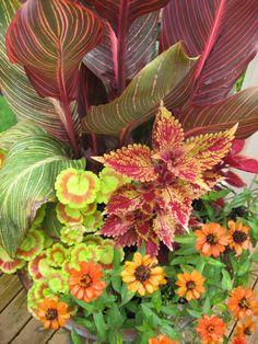 container gardening, canna, coleus, landscape design