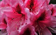 imagenes    ... de escritorio gratuito top imagenes nuevas imagenes bonitas flores
