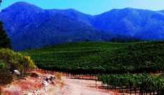 The beautiful colors of Knight's Valley captured by Winemaker Matt.