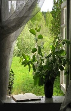 White Lilacs On Window Sill