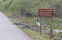 In case you can't read the sign it says- hikers and bikers, please move to the side of the road when a vehicle approaches