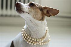 Pearls on pets