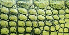 green natural crocodila skin as animal texture