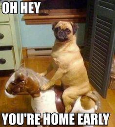 Dog Caught