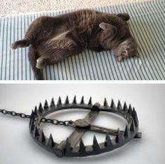A Deadly Trap