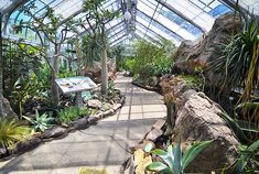 The U.S. Botanic Garden is where I go if I need a  mini vacation in DC.   Orchids, tropical plants or dry desert air are all housed in that marvelous glass structure.