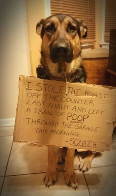 I stole the roast off the counter last night and left a trail of poop in the garage this morning.