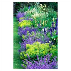 Love this for my corner bed.   Blue & chartreuse border with Nepeta 'Six Hills Giant', Alchemilla mollis, Astrantia major, Delphinium, Lupinus 'Russell Hybrids', Aconitum, Hostas - High Glanau Manor, Monmouthshire, Wales.
