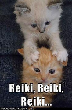 Reiki Kitty!