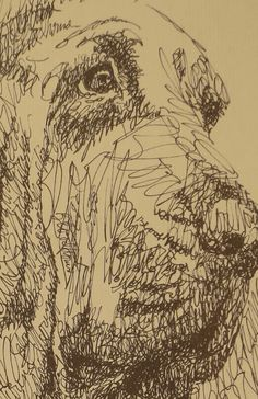 Bloodhound dog art portraits, photographs, information and just plain fun. Also see how artist Kline draws his dog art from only words at drawDOGS.com #drawDOGS http://drawdogs.com/product/dog-art/bloodhound-dog-portrait-by-stephen-kline/