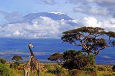 bucketlist, bucket list, beauti place, giraff, natur, travel, mount kilimanjaro, tanzania, africa