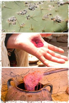 wool being dyed with cochineal insects |  http://blog.peruvianconnection.com/uncategorized/ancient-textile-traditions-of-chinchero/