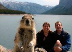 Squirrel photo bomb.
