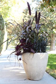 Gardenista container of the month October patio plants
