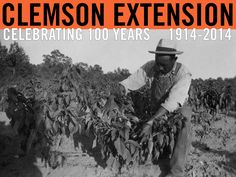 Pimento pepper demonstration conducted by Mr. Roosevelt Benson, Lower Shady Grove Community. Date unknown. Image from Clemson University Special Collections. #ClemsonExt100