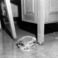 """Unpublished. An SS officer's cap, with the infamous """"death's head"""" skull emblem just barely visible. Of this image, Vandivert's notes state simply: """"moldy SS cap lying in water on floor of sitting room."""""""