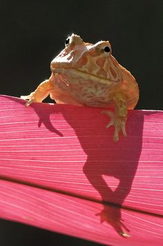 love frogs!!!!