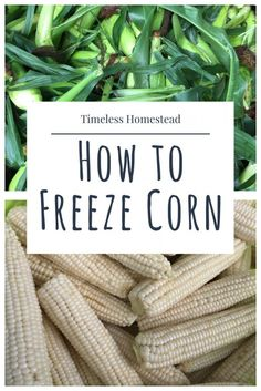 How to Freeze Corn.