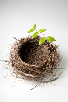 Empty Nest is a great opportunity for kindling a new relationship with your Child!