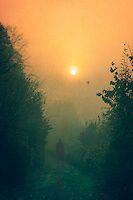 pale morning sun