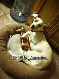 Don't Judge
