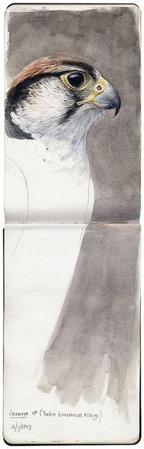 Lanario, by Marco Preziosi (via Flickr).