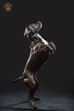 Black dog art