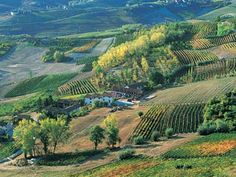 Piedmont, Italy one of the largest wine producing regions in Italy.