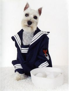 I would sail the seven seas.                          Jack the wonder dog