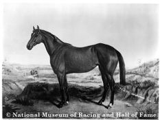 Ruthless- 1867- First Belmont Stakes Winner