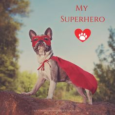 🐶Happy #NationalPuppyDay! Celebrating our fur superheroes and furry BEST friends! 🐾❤️ #TBITalk #BestFriends #appreciationpost #FridayFeeling #superheroes #superhero #dogsarethebest #puppylove