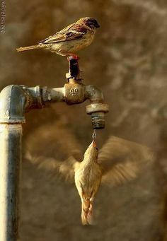 20 Perfectly Timed Breathtaking Pictures - Part II | Incredible Pictures