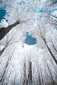 The Blue Sky sky, winter trees, snow, winter wonderland, white, blue skies, forest, winterwonderland, blues