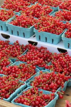 Learn at the farmers' market with kids! 5 Fun Activities for a trip to the Farmers' Market.