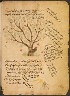 from Ibn al-Baytar's treatise Jâmi mufradat al-adwiya wa-'l-aghdiya. Suleymaniye Library, Ayasofya, MS 3748. Read: Nil Sari, Food as Medicine in Muslim Civilization http://www.muslimheritage.com/uploads/Fig_3c_Arabic_botanical_manuscript.JPG librari, medicin, sari