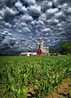 Wisconsin farm  ii