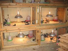 Baby chick set- up. Would do withOUT heat lamps. Don't want a coop fire, their is such better products out their.
