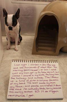 shaming funny dog photos | Dump A Day funny dog shaming - Dump A Day