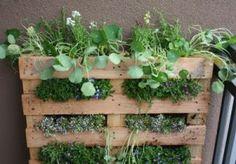 Garden Pallet herb garden