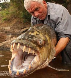 Goliath-Tigerfish....I love this guy!  Scary fish!