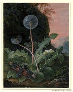 margaretha barbara, pink sky, green moth