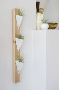 Make This!: Wall-mounted air plant holder