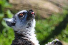 Facial expression | Flickr - Photo Sharing!