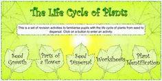BILINGUAL AL-YUSSANA: THE LIFE CYCLE OF PLANTS