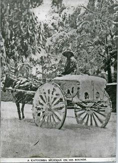 A Katoomba milkman on his rounds 1908
