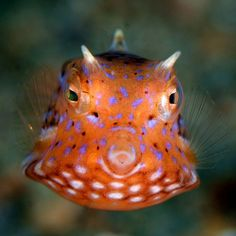 The ocean's colorful creatures