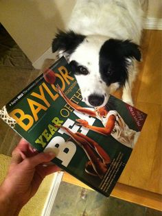 "Even this pup is Baylor Proud! ""Fighting over who gets to read the latest Baylor Magazine first."" (via @Sydney Jackson)"