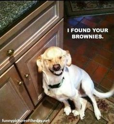 I found your brownies :) dog pics, smiling dogs, anim, funny dogs, the face, funni, puppi, laughter, sweet peas